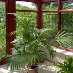 big-plant-conservatory